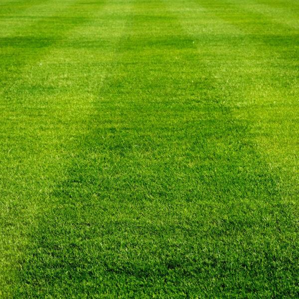 prato di un campo da calcio